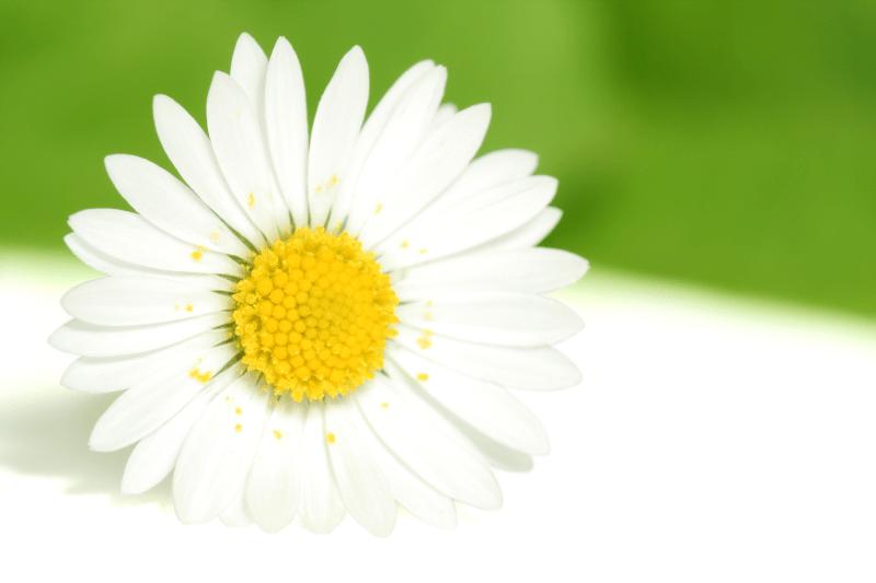 Лечебни растения