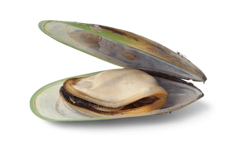 Зеленоуста мида (Perna canaliculus) в терапията на възпалителни ставни заболявания