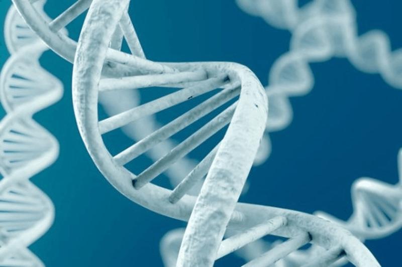 Ултраструктурни промени при Сryptococcus neoformans под влияние на НСПВС