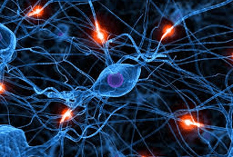 Столовите клетки в неврологията