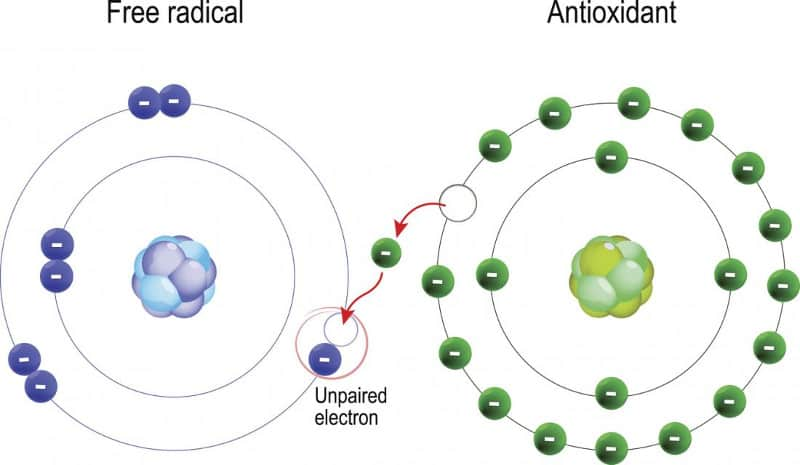 Липидна пероксидация и антиоксиданти