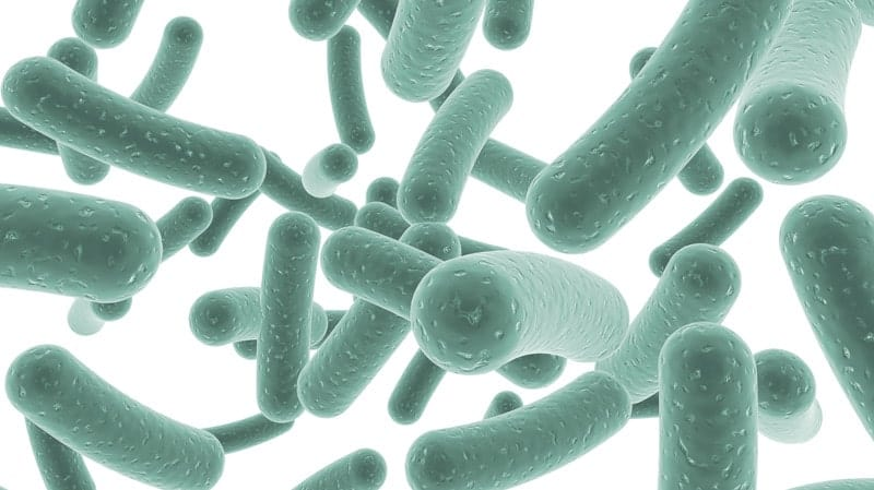 Имунобиотик или пробиотик е за предпочитане при антибиотична терапия